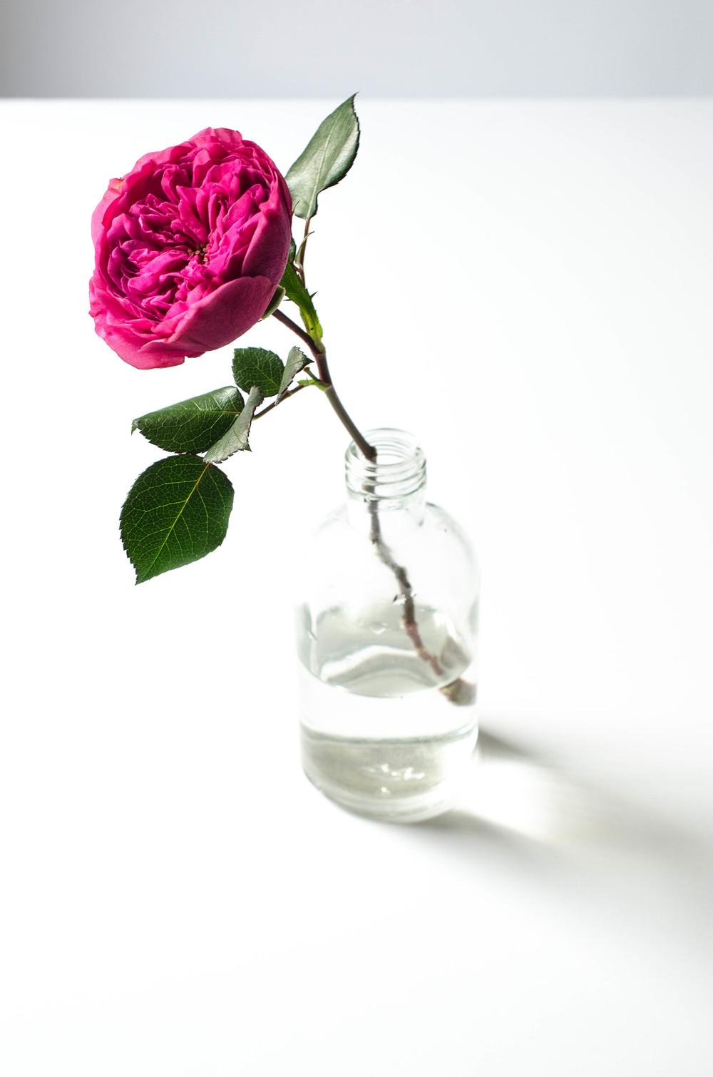 'Baronesse' Rose