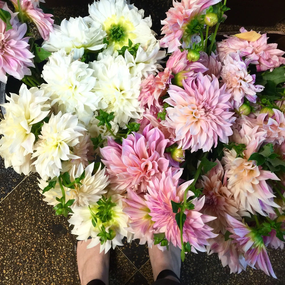 Dahlia season is in full swing at the flower market