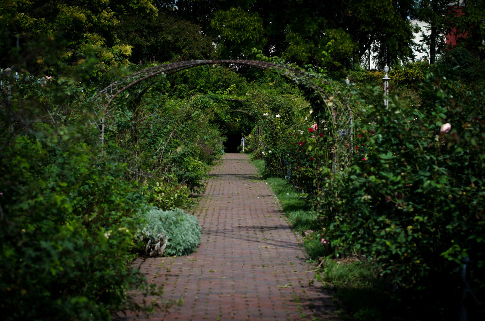 ROSE & IVY JOunral A Rose Garden