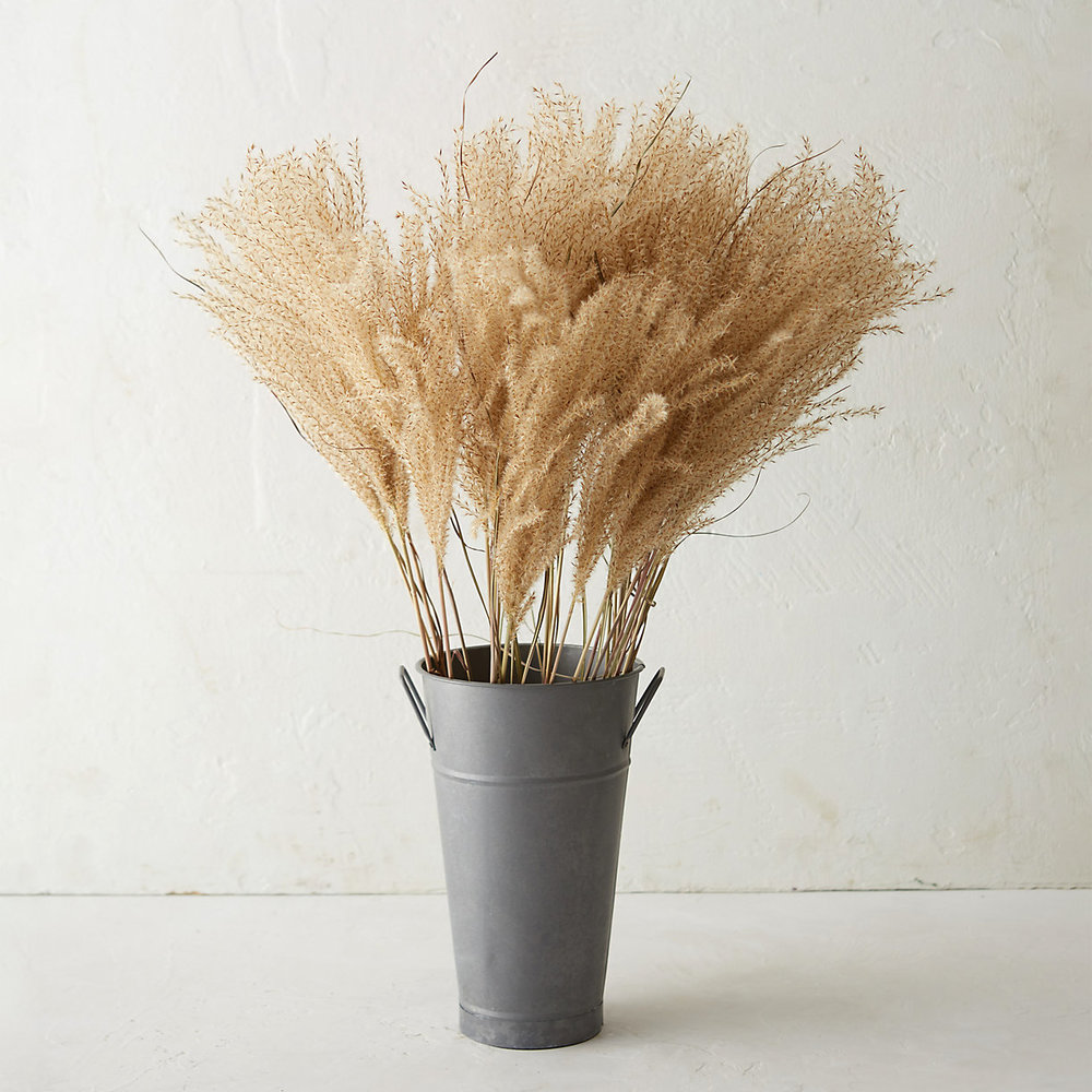 Dried Miscanthus