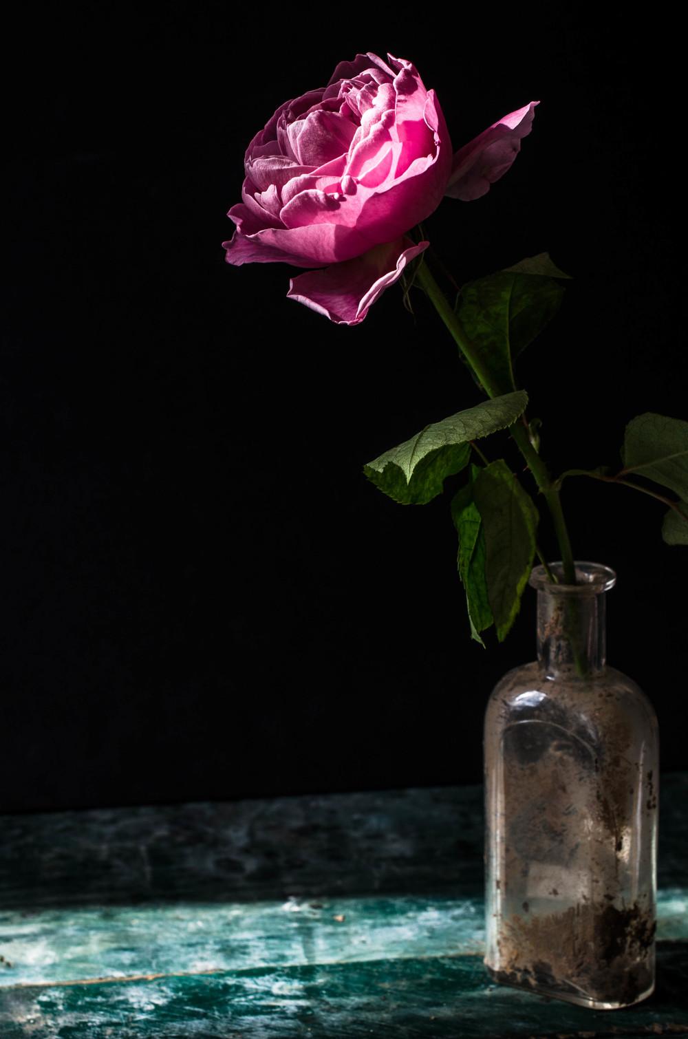 ROSE & IVY JOurnal Petal by Petal David Austin Phoebe