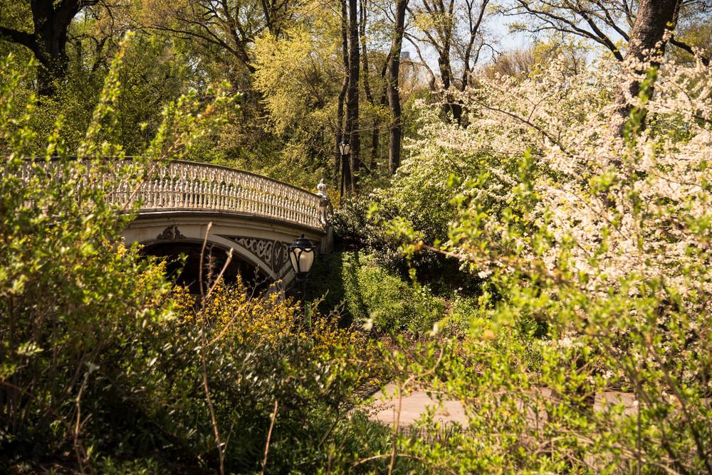 ROSE & IVY Journal Central Park in Full BLoom
