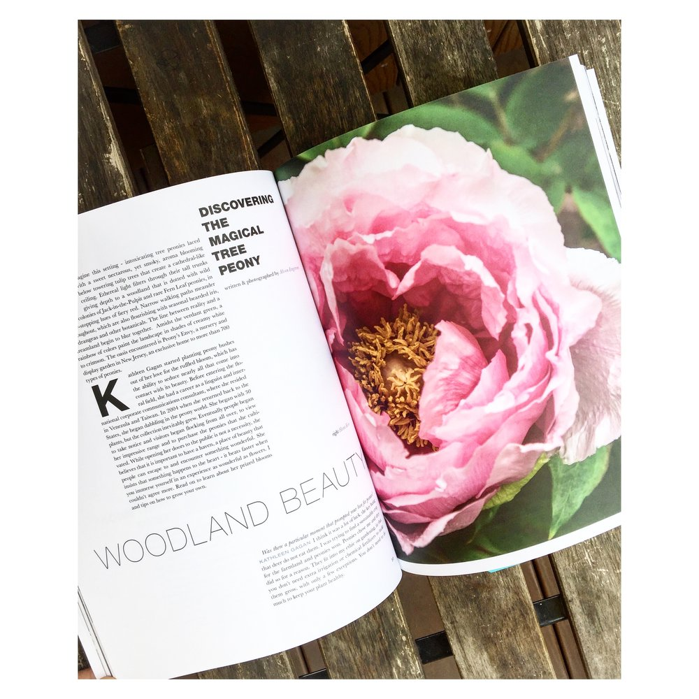 ROSE  & IVY Journal On the Value of Print