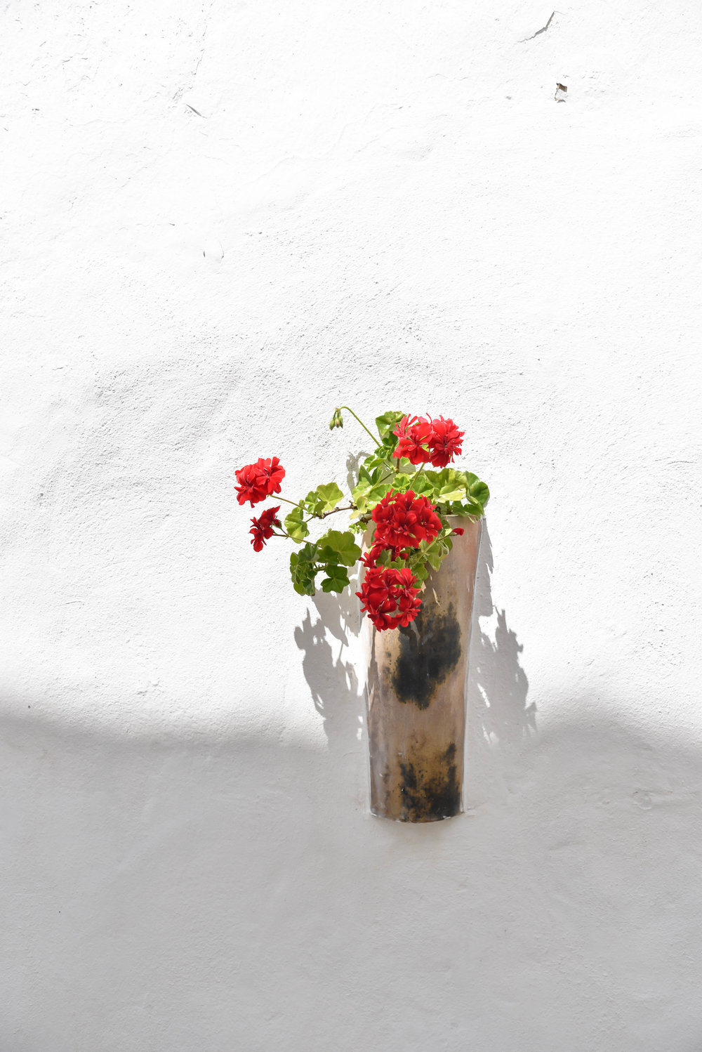 ROSE & IVY Journal Escape Vejer de la Frontera, Spain Viejo Blanco