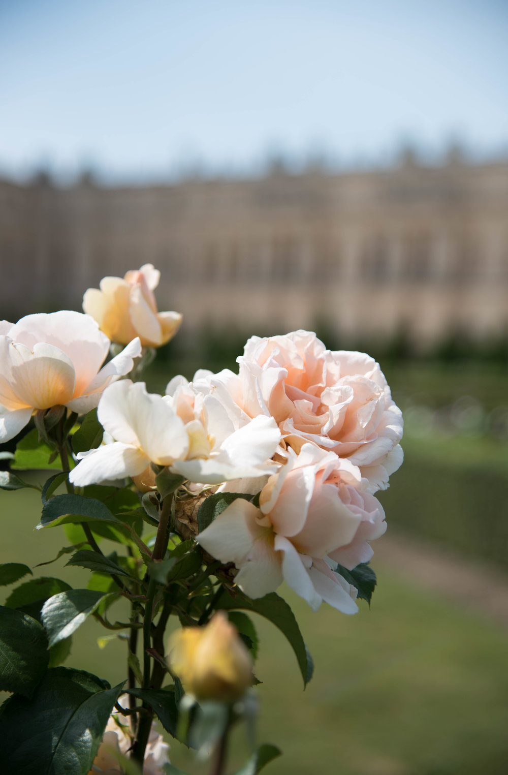 ROSE & IVY Journal Garden Dreamer | Solitude at Versailles