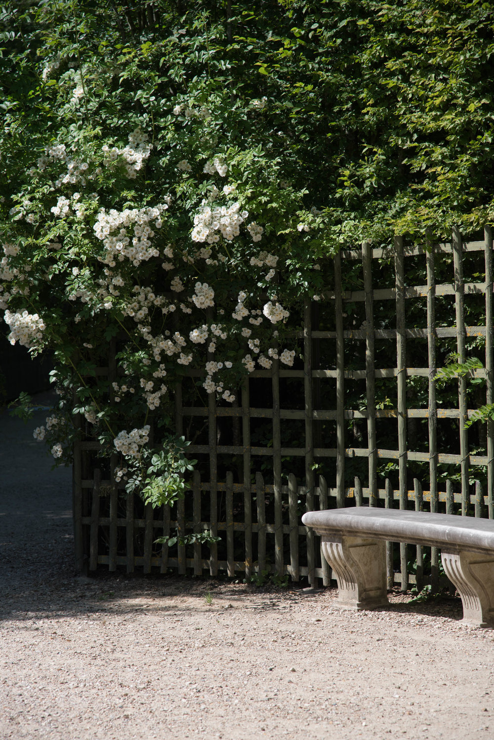 ROSE & IVY Journal Garden Dreamer Solitude Among the Beauty of Versailles