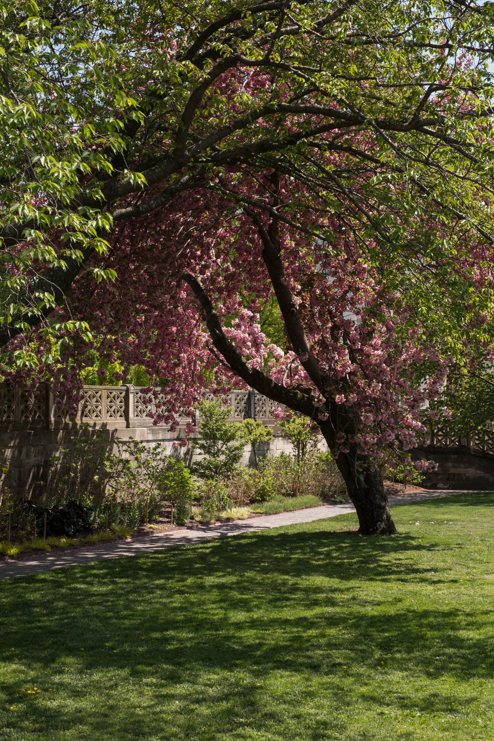 The Secret Garden : Discovering the Beauty of Untermyer Park and ...
