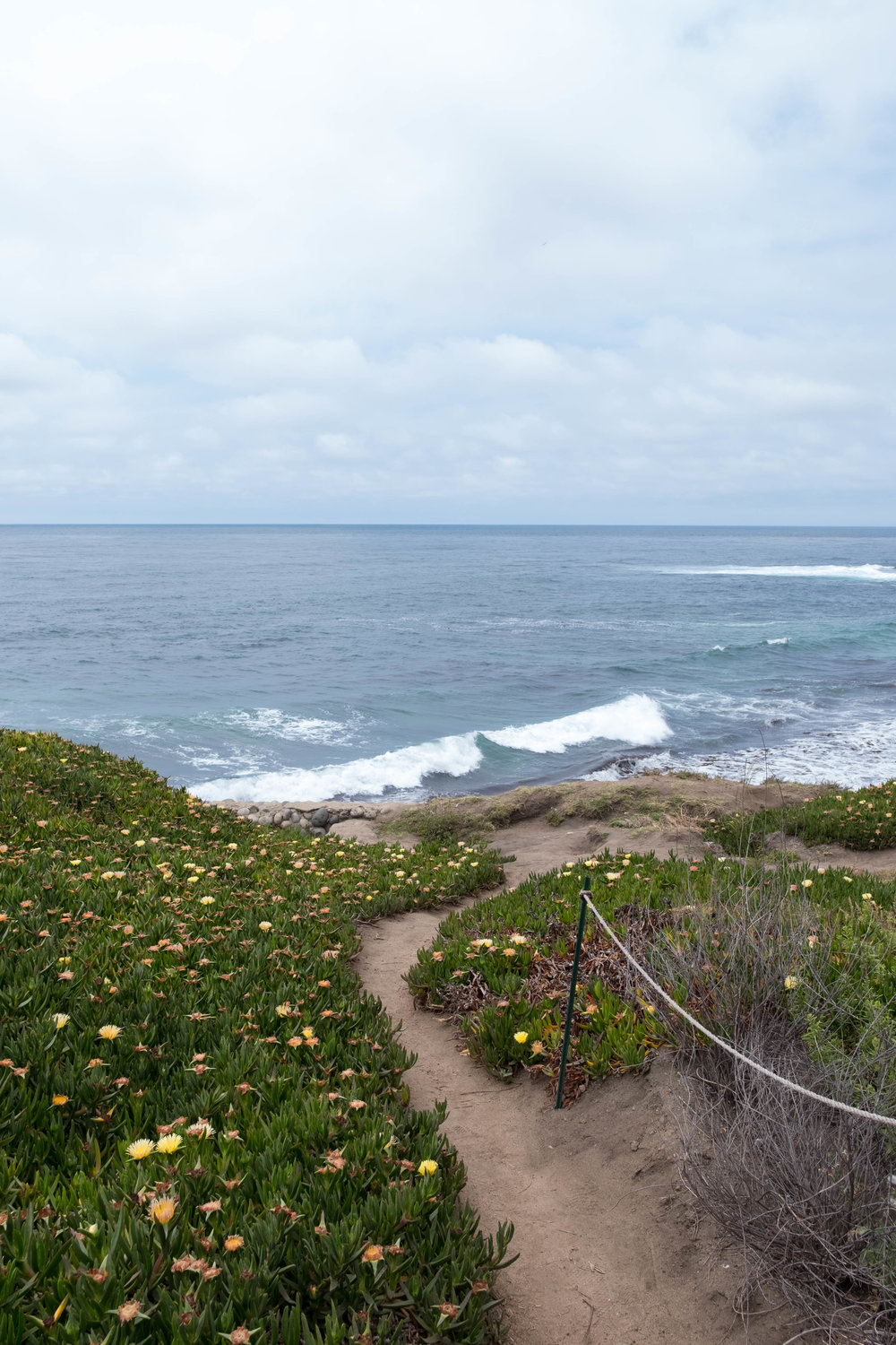 ROSE & IVY Journal Discovering La Jolla | What to See & Do