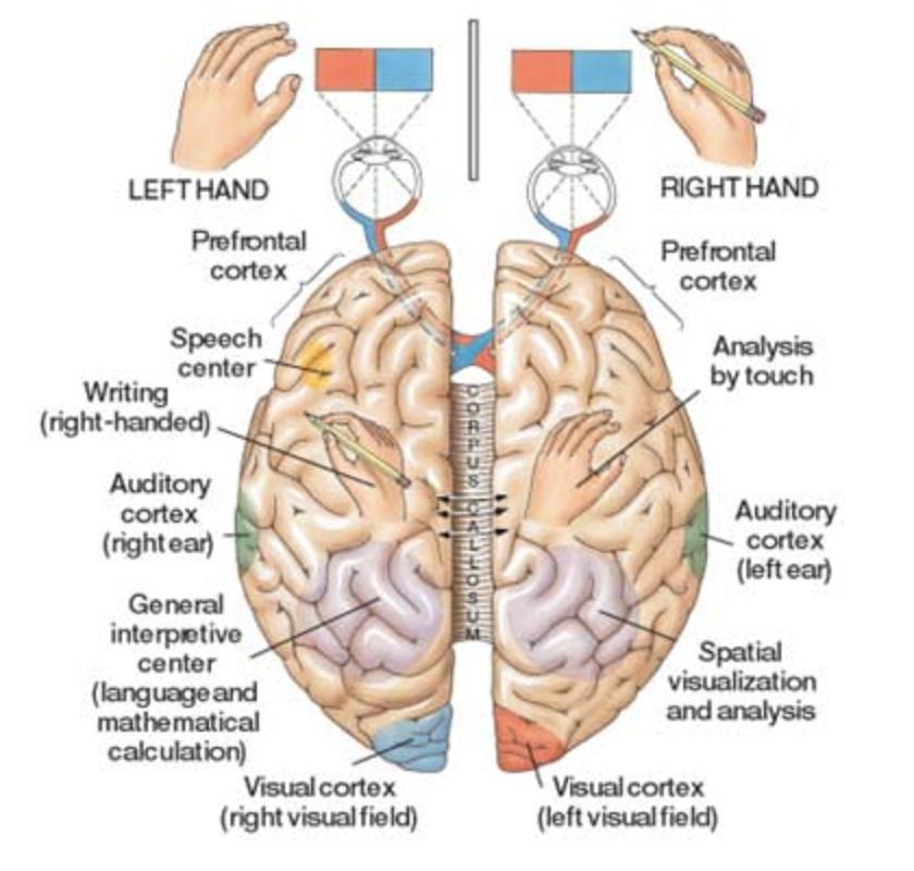 Brain Connections Chiro Connect Wanaka