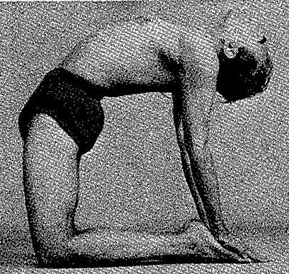 Ustrasana Iyengar