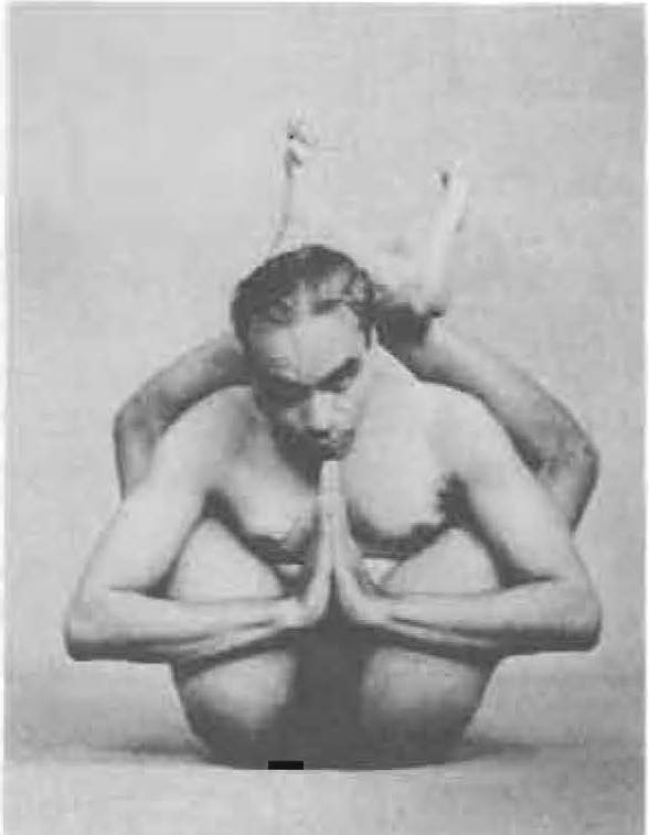 146-dwi-pada-sirsasana-yoga-pose-iyengar.jpg