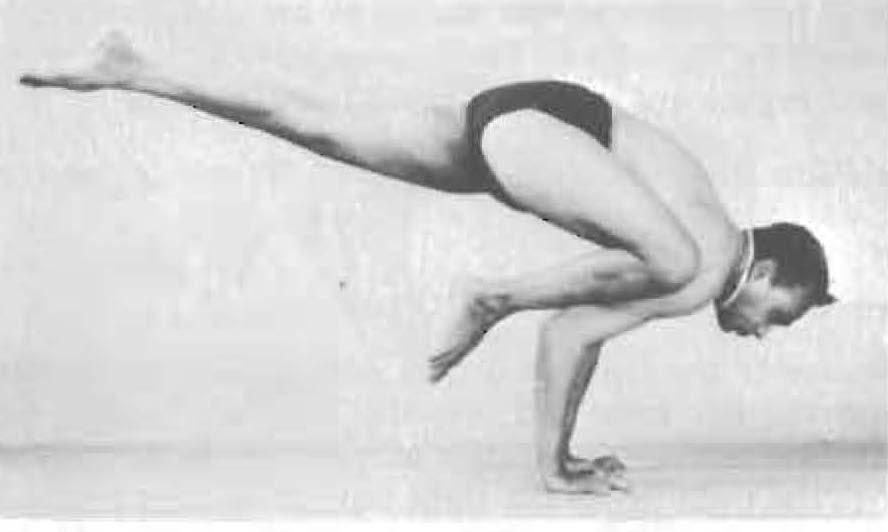 160-eka-pada-bakasana-1-yoga-pose-iyengar.jpg