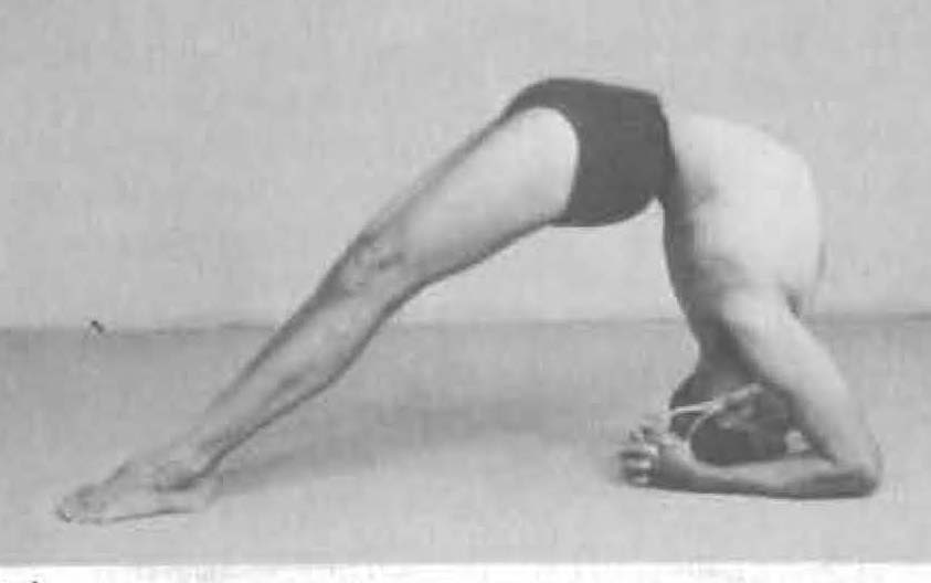 177-dwi-pada-viparita-dandasana-yoga-pose-iyengar.jpg