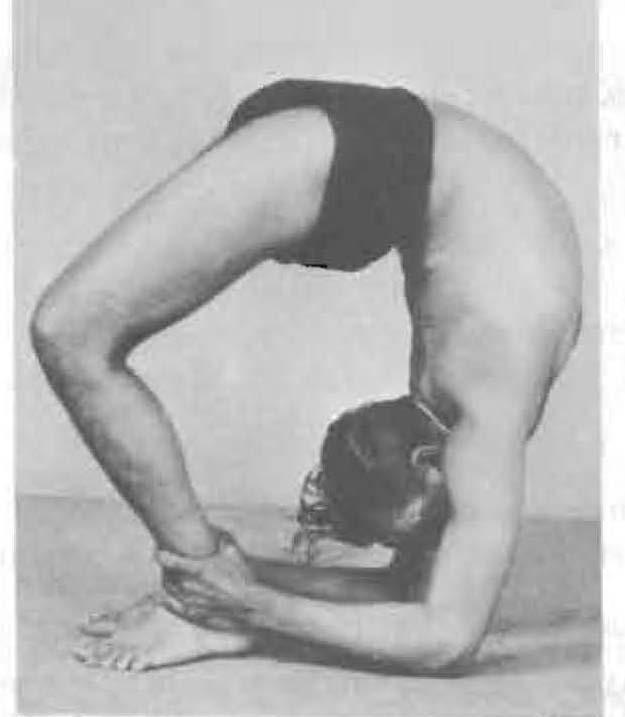 180-chakra-bandhasana-yoga-pose-iyengar.jpg