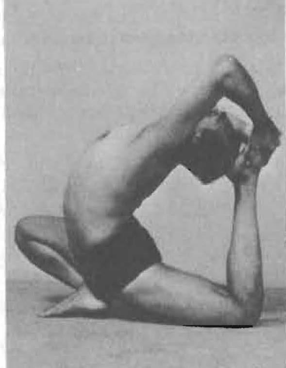 186-eka-pada-rajakapotasana-2-yoga-pose-iyengar.jpg