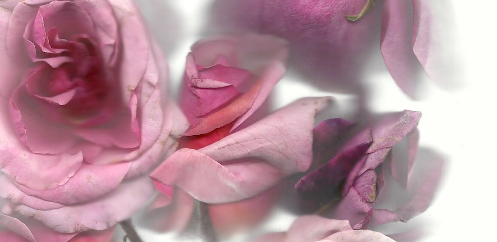 Flora_05.jpg