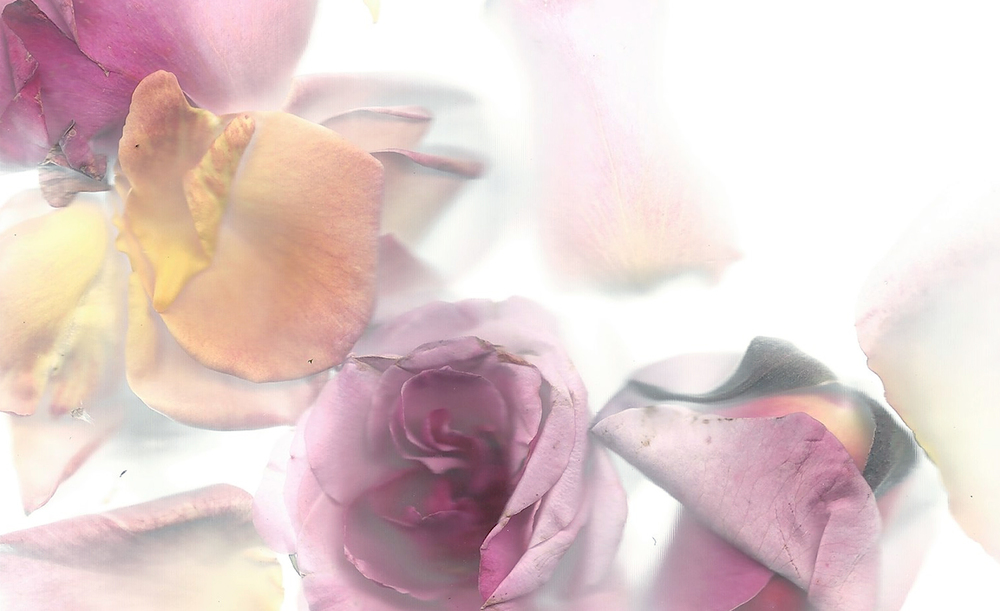 Flora_07.jpg