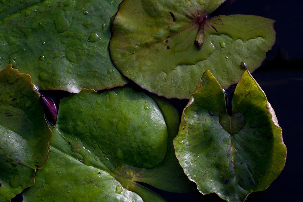 lily3.jpg