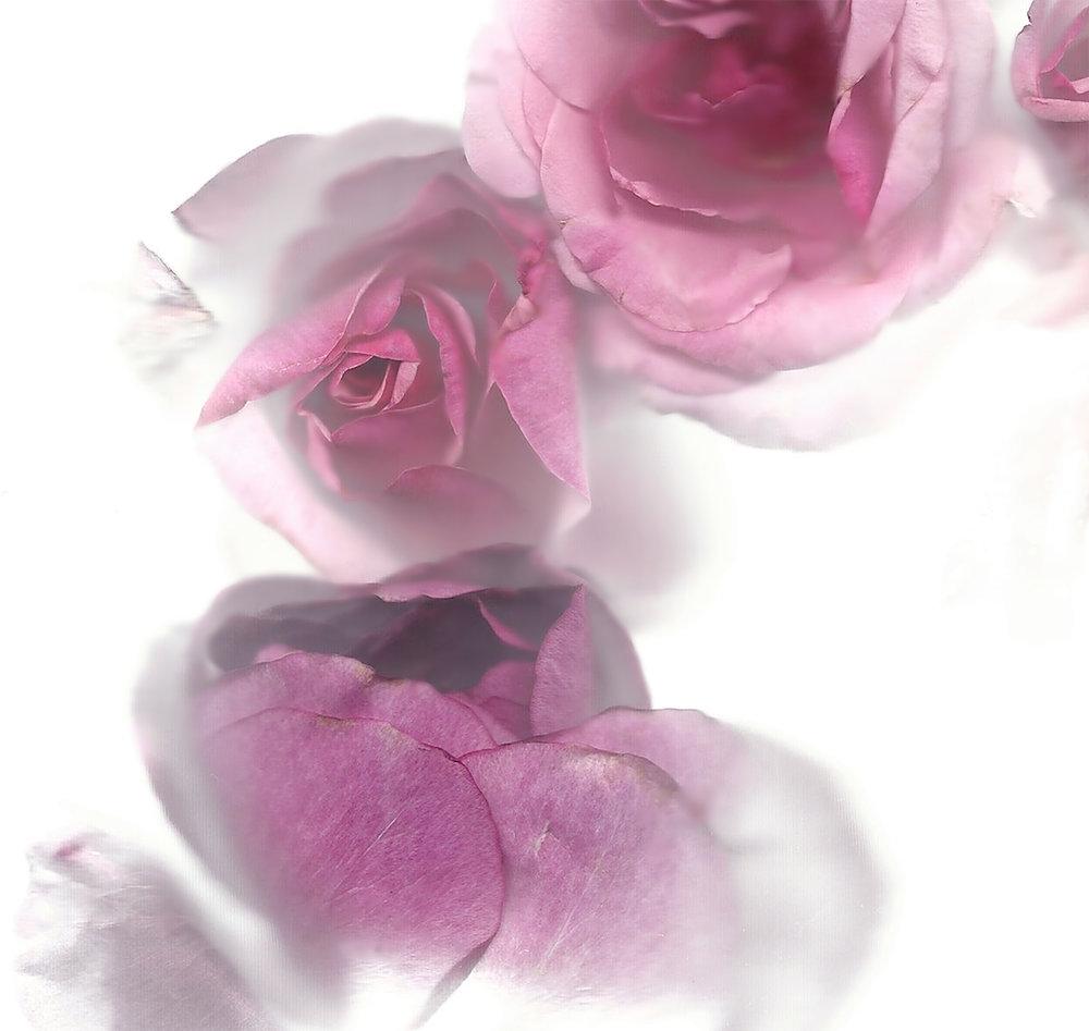 Flora_02_PS.jpg