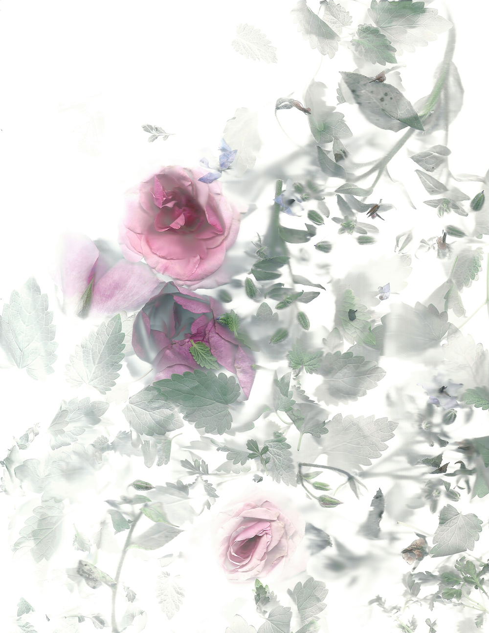 Flora_03_PS.jpg