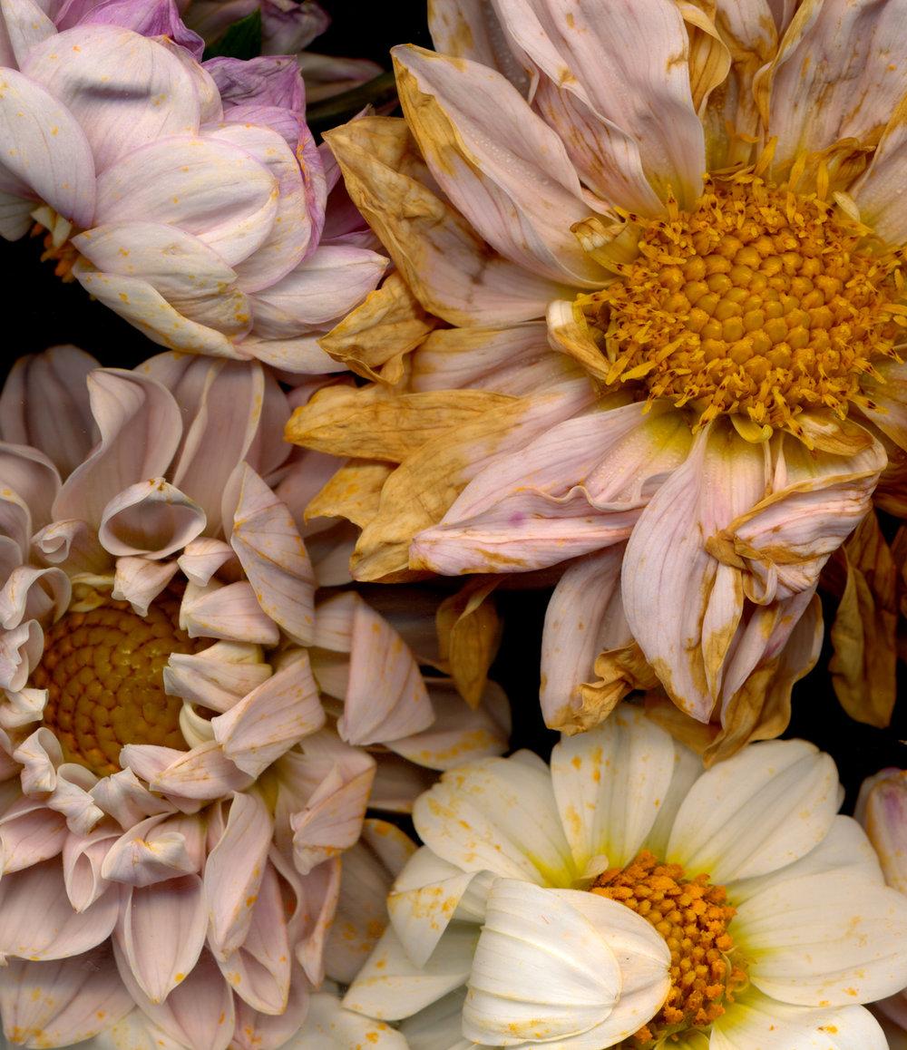 flowers2-1.jpg