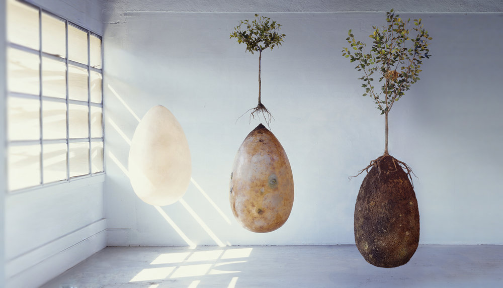 Italian firm Capsula Mundi turns cemeteries to forests with their  organic, biodegradable burial pods.