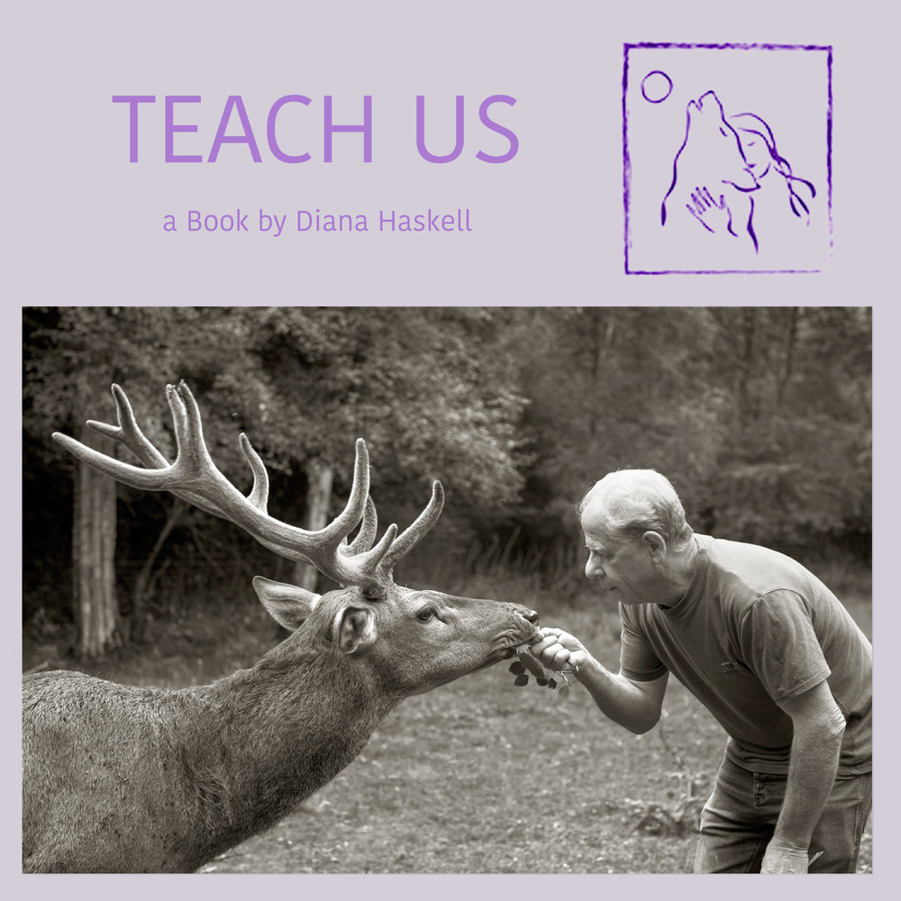 """TEACH US"" :: book project in production: What can we learn from Animals? Diana Haskell Photography <> Creative Producer <> Photographic Imager"