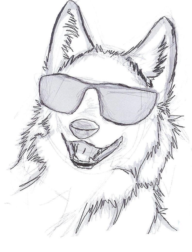 Cool Coyote.jpeg
