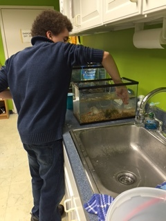 Ethan setting up the feeder fish tanks