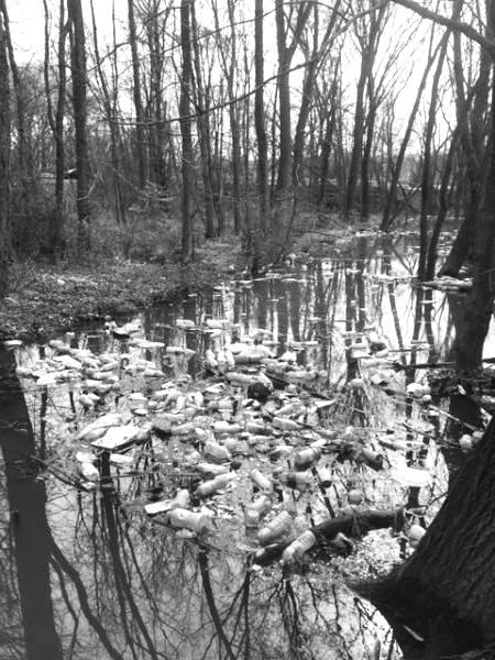 watershed cleanup.jpg