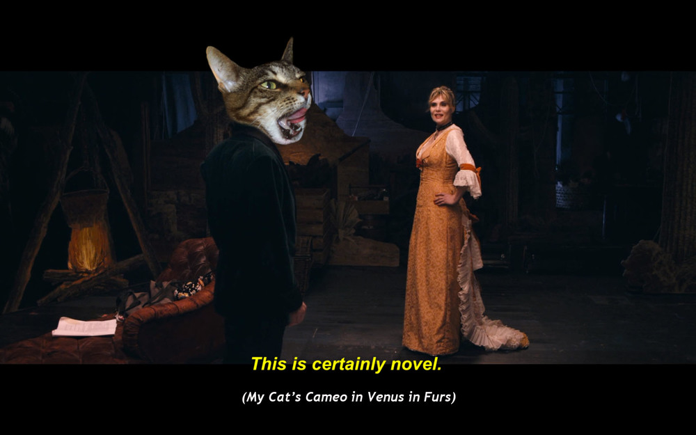 The Cat's Cameo in  Venus in Fur