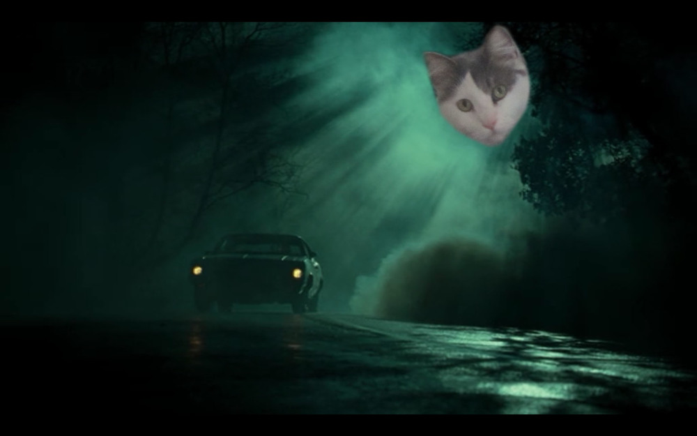 (A Cat's Cameo in  The Fog )