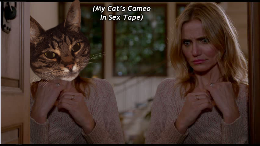 (My Cat's Cameo in  Sex Tape )