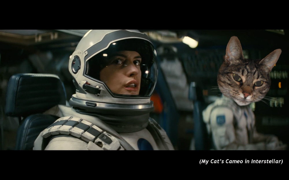 My Cat's Cameo in  Interstellar