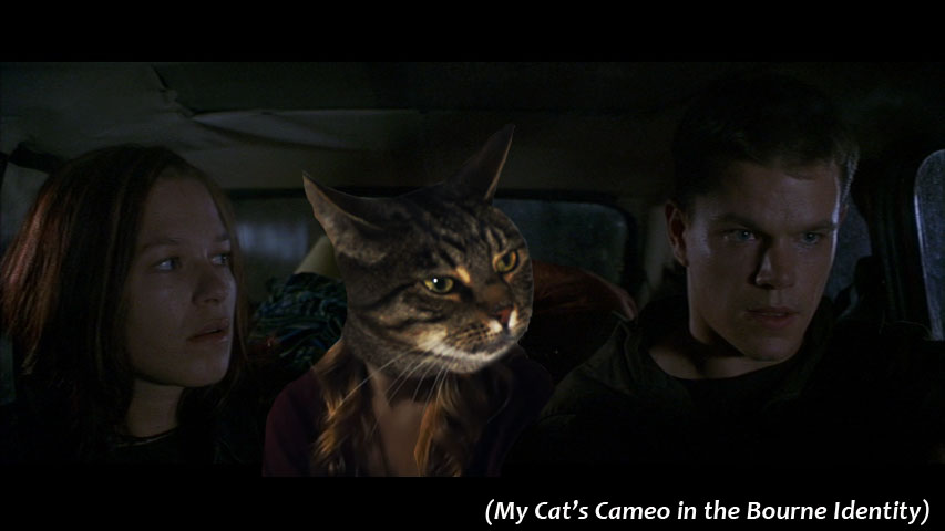 My Cat's Cameo in  The Bourne Identity