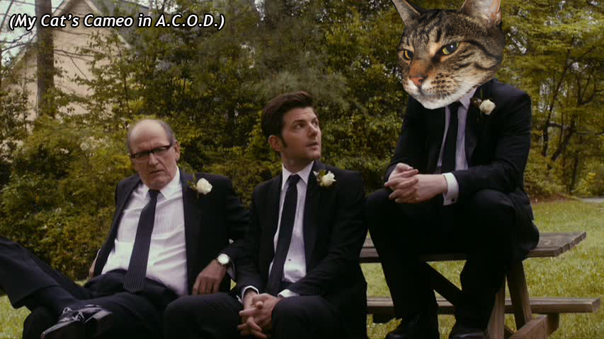 My Cat's Cameo in  A.C.O.D.