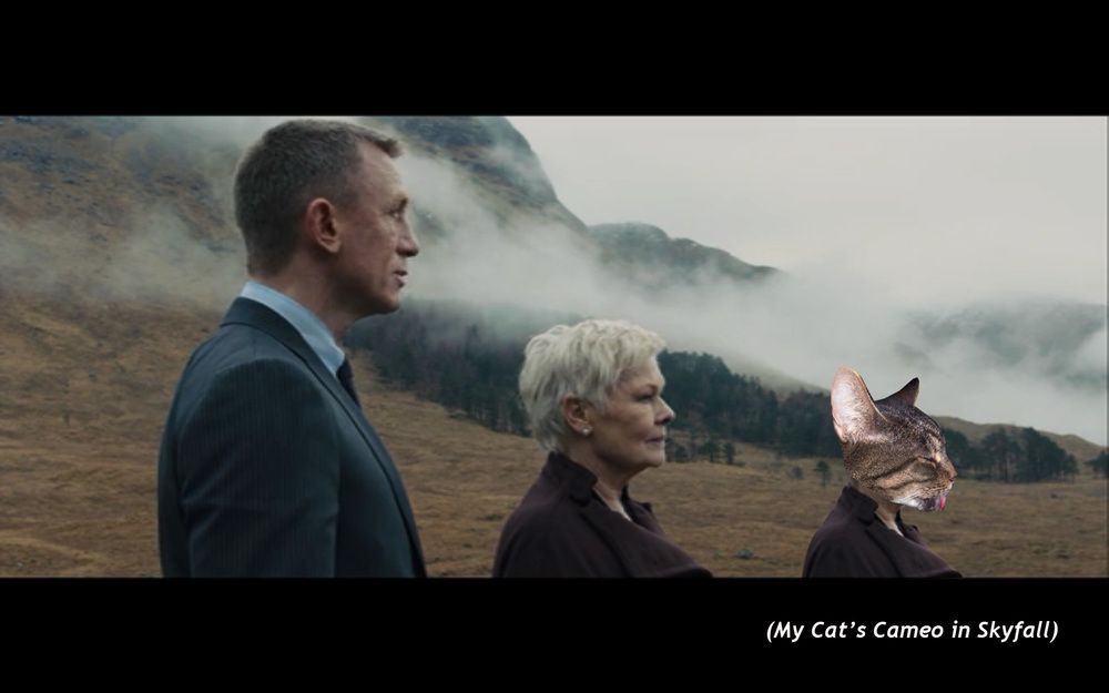 My Cat's Cameo in  Skyfall