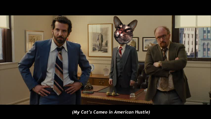My Cat's Cameo in American Hustle