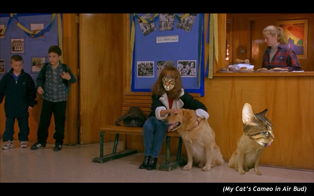 My Cat's Cameo in  Air Bud