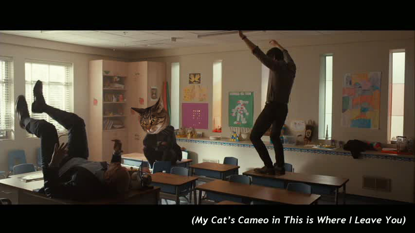 My Cat's Cameo in  This is Where I Leave You