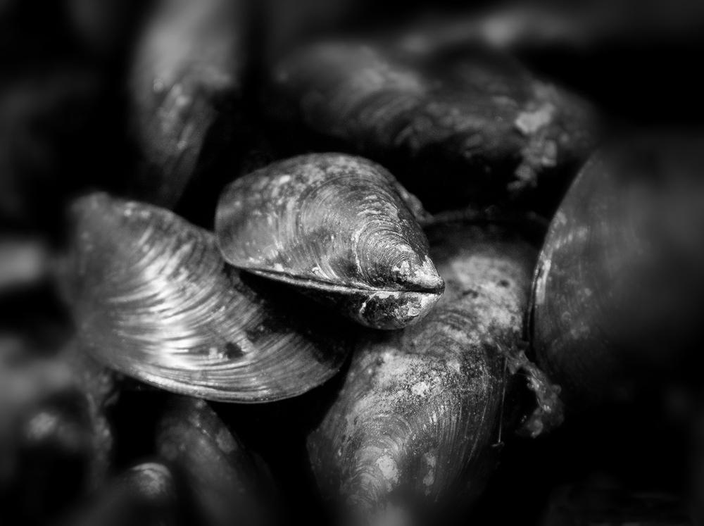 mussels-sqsp.jpg