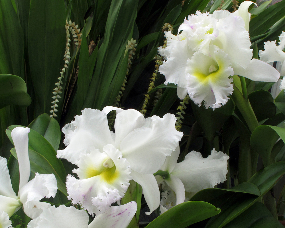 orchidsinwhuite-sqsp.jpg