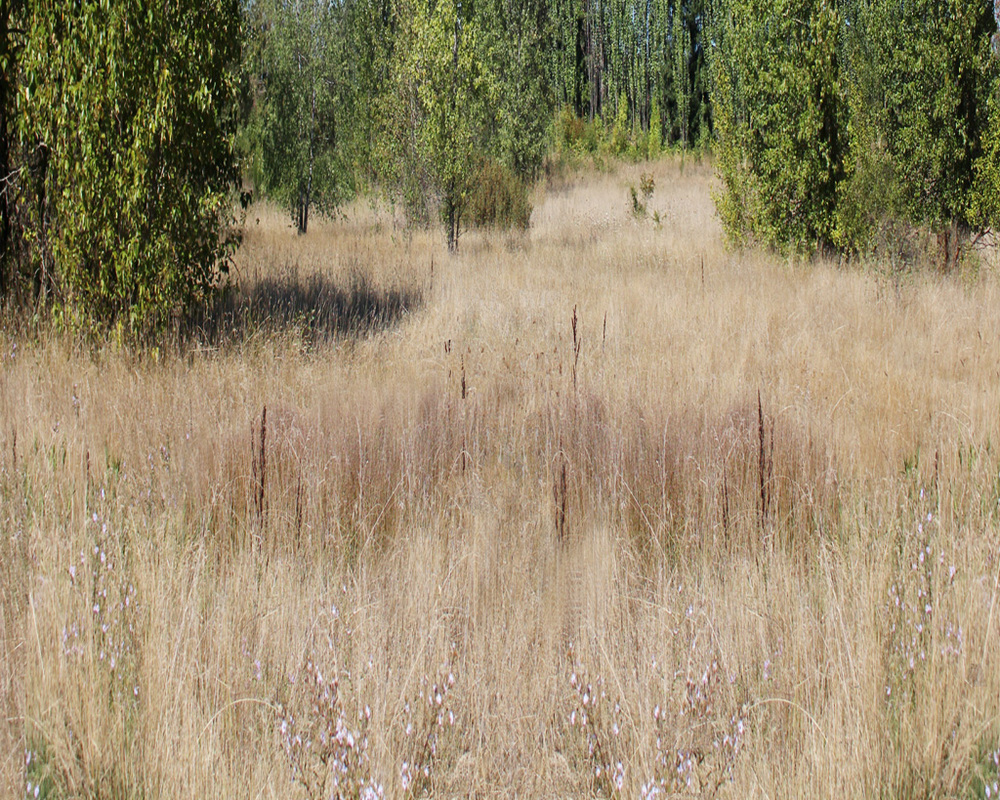 Magnuson Meadow