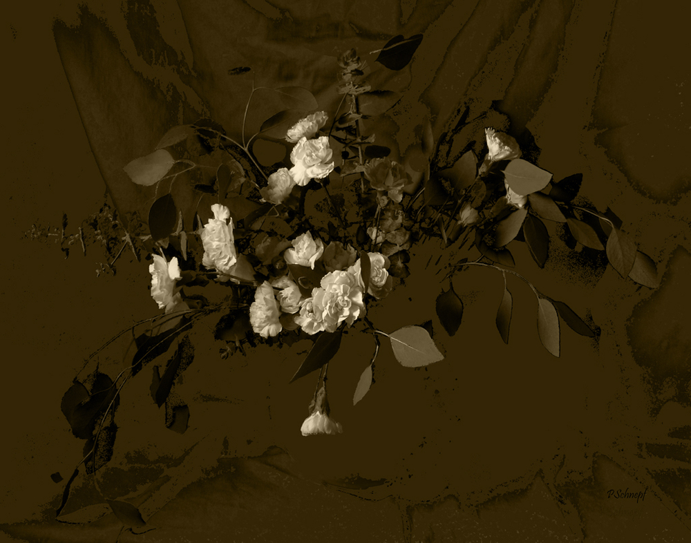 White Roses in Sepia