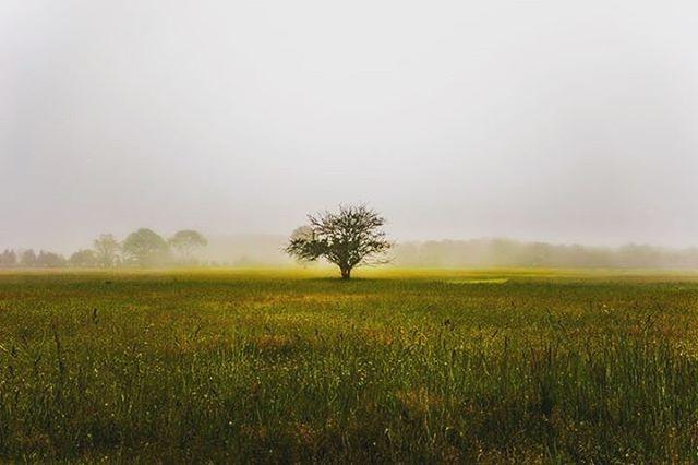 #tree #treeoflife #montauk #roadside #farm #foggy #mist #mistyday #field #grassfield #sony #sonya7r #hobbyphotography #vacation #igers #igernewyork #igermontauk #center #lionking #sonyimages #passion #visualsoflife #photography #random