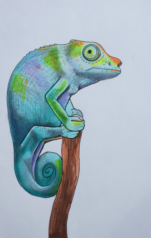 Chameleon.JanaHope2015.jpg