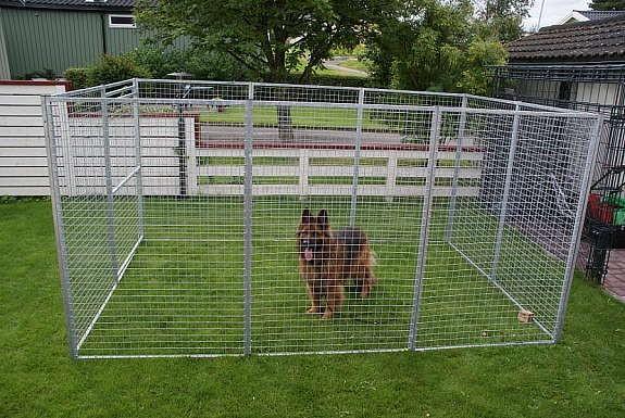 Hundegården med en mellom-stor hund