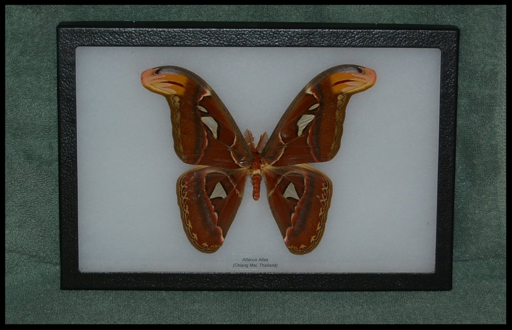 B 49 - Faith Beery handcrafted wood boxes and butterfly displays