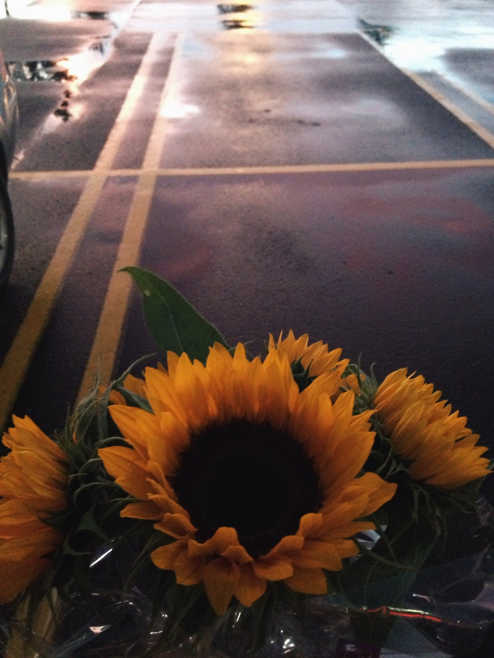 although you can't buy happiness, you can buy sunflowers. in my case, that's close enough.