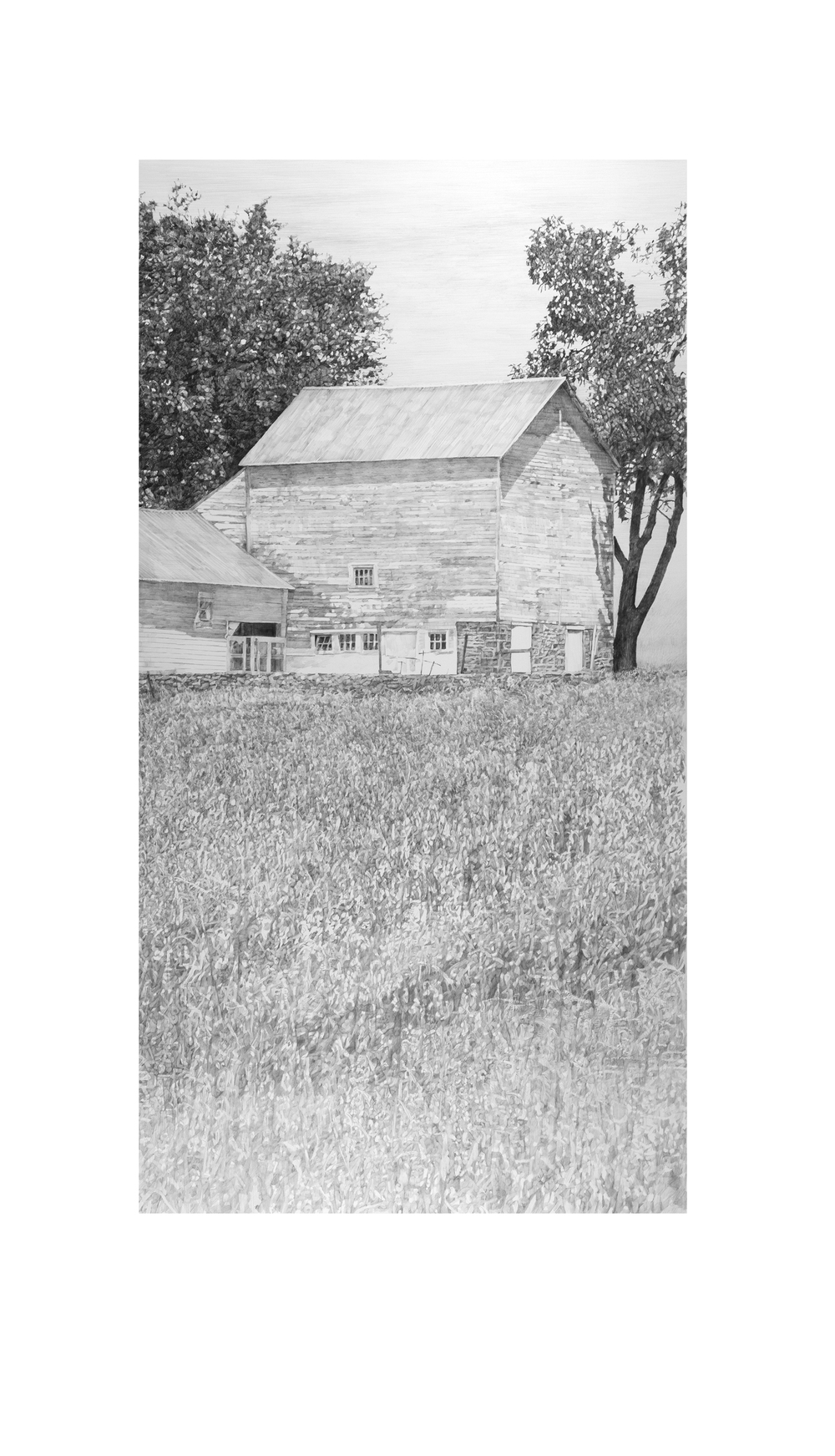 "Buck's County Barn  Graphite on paper  38"" x 20"""